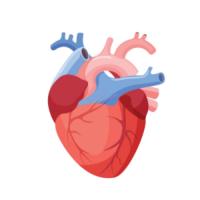 دكتور جراحة قلب