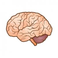 دكتور جراحة مخ وأعصاب وعمود فقري